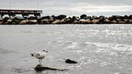 sea landscape bird beach