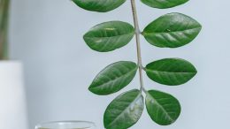 green leaf plant in clear glass vase