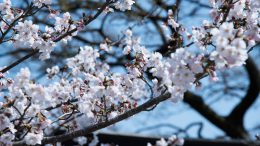 selective focus photography of white flowering tree