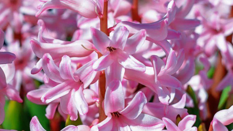 flowers summer garden park